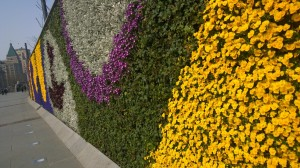 Fresh flowers wall along the Bund, Shanghai